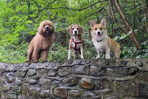 Cardiff Dog Walking
